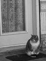 Frenchcat