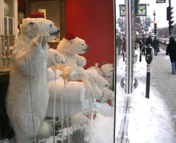 Polarbearsinwindow