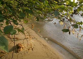 Wnpsk_shoreline
