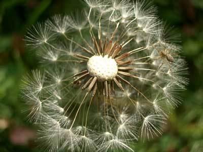 White_flower_1