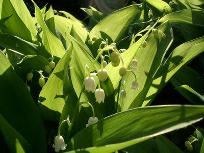 White_flower_5