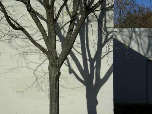 Treeandshadow