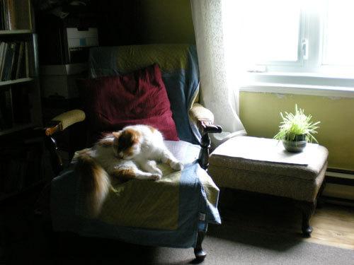 Catinchair